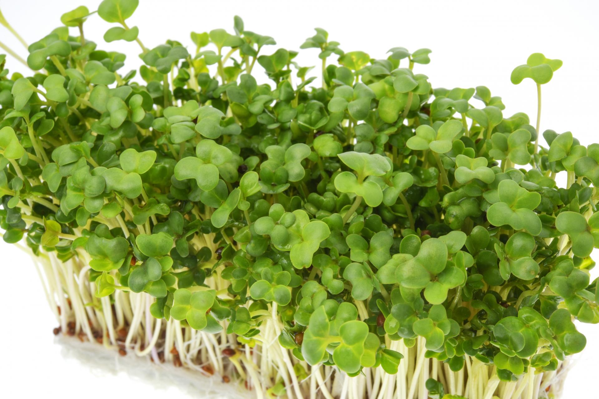 ブロッコリースプラウトに含まれる毛髪に関係する栄養素