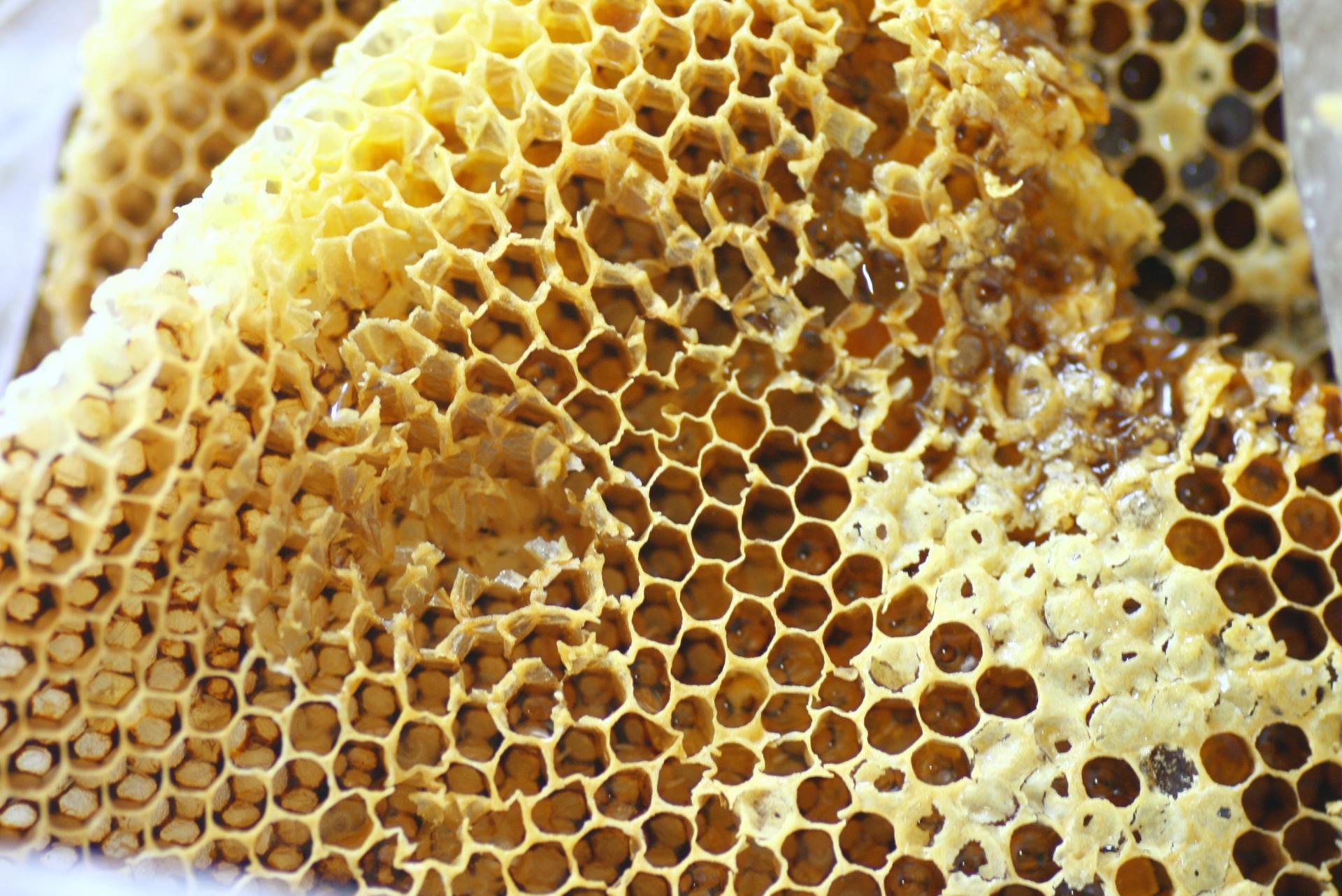 頭皮の育毛環境を向上させる蜂蜜に含まれる栄養素