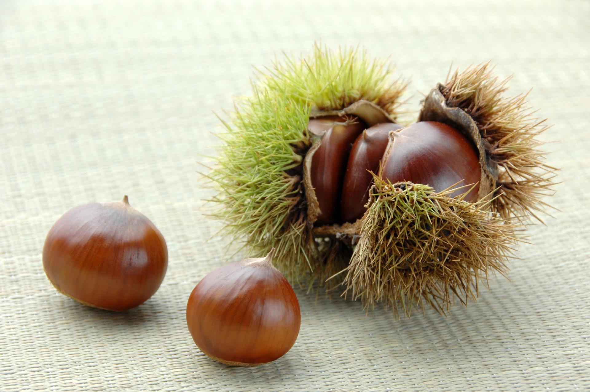 ビタミンやタンニンが豊富な栗が薄毛対策に効果的な理由とは