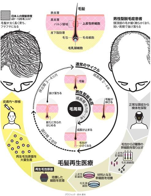 毛髪再生医療のメカニズムを図化した画像