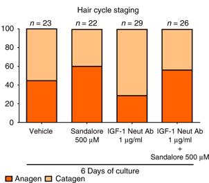 サンダルウッドによってヘアサイクルの退行期の状態にあった毛包が成長期への移行した研究結果