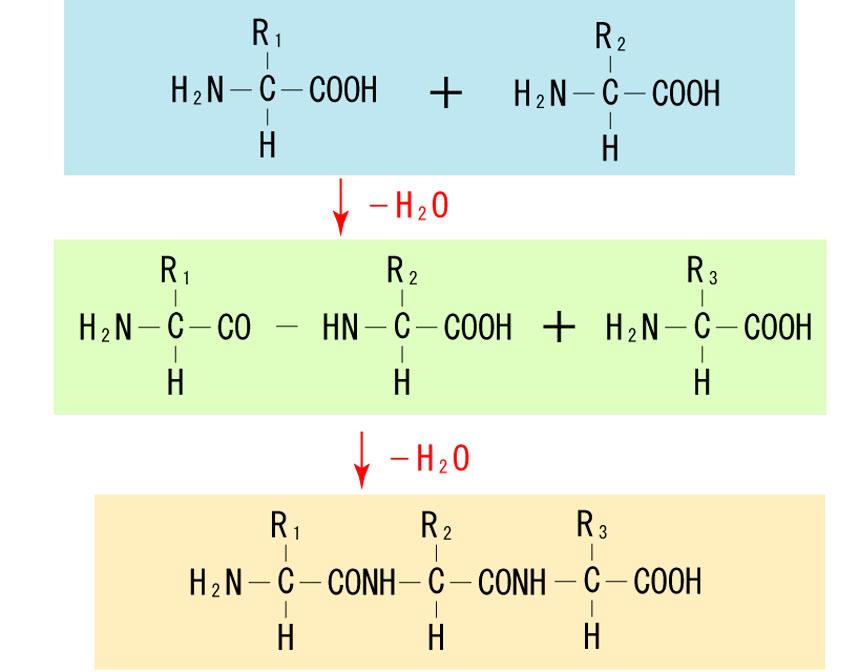 ケラチンの化学式
