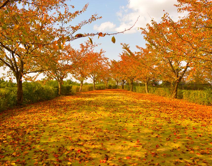 秋は抜け毛の季節?季節と抜け毛の関係性について