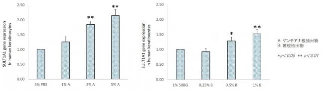 カッコンエキスが硫酸移転酵素を活性させるグラフ